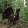Protection of biodiversity – Europe must make a greater effort