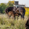 50 years later: the largest Soviet base after the occupation of former Czechoslovakia in 1968 has changed into a wild horse and wisent paradise