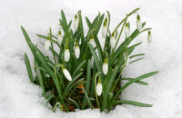 Cool spring is a consequence of climate changes, scientists point out