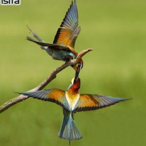 European Wildlife - Photo: Isifa