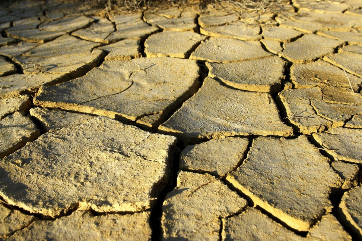 Dried-up reservoirs and fish ponds. This year has shown that they do not work as protection against drought