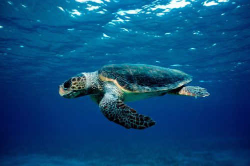 Commercial fishing threatens the sea turtles in the Mediterranean, scientists warn