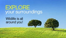 Explore your sorrounding